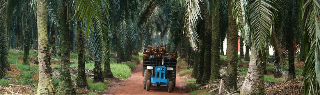 palm-oil-supply-chain